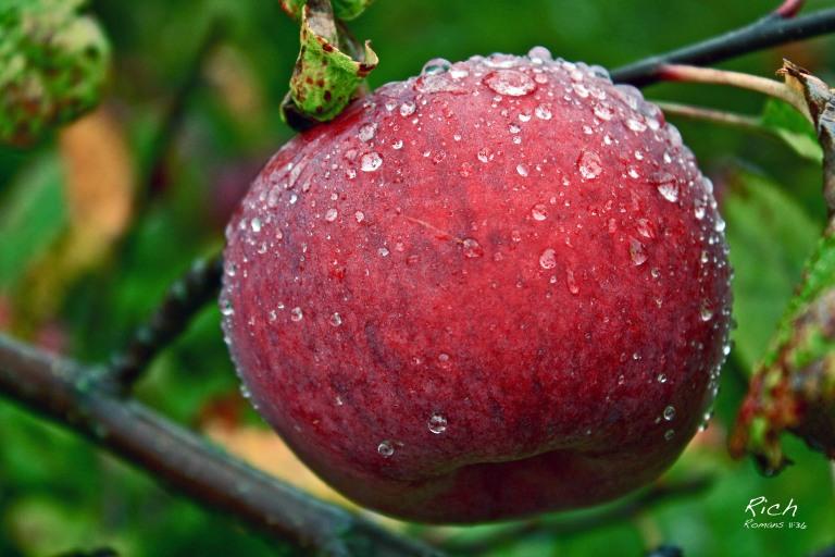 Rainy Day Apple