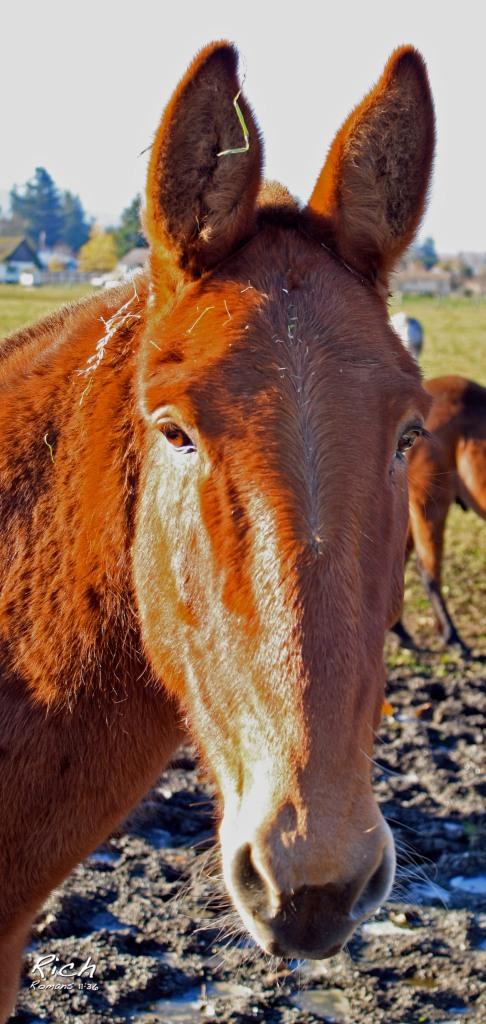 A Friendly Horse