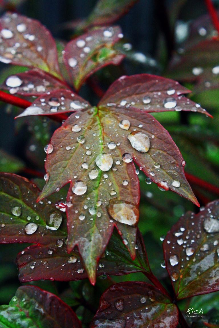 In The Rain 2