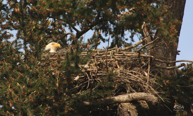 Minding the Nest