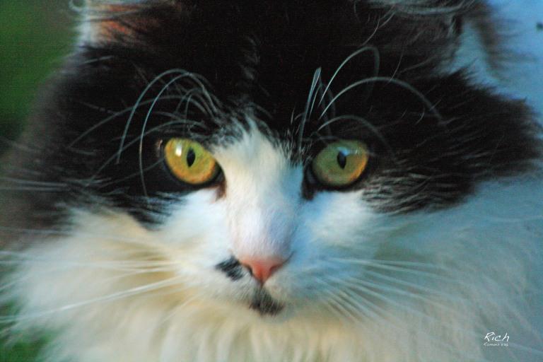 Trilby Portrait