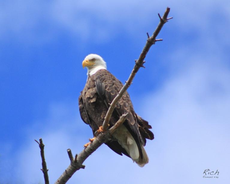 Eagle Along the Way