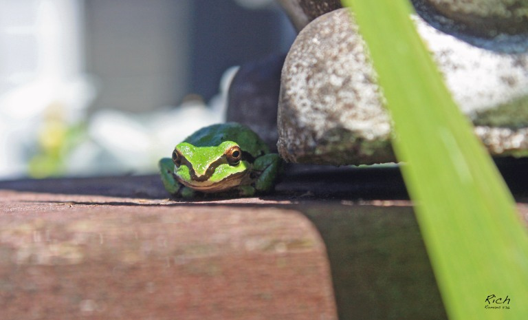 Froggy in the Shadows