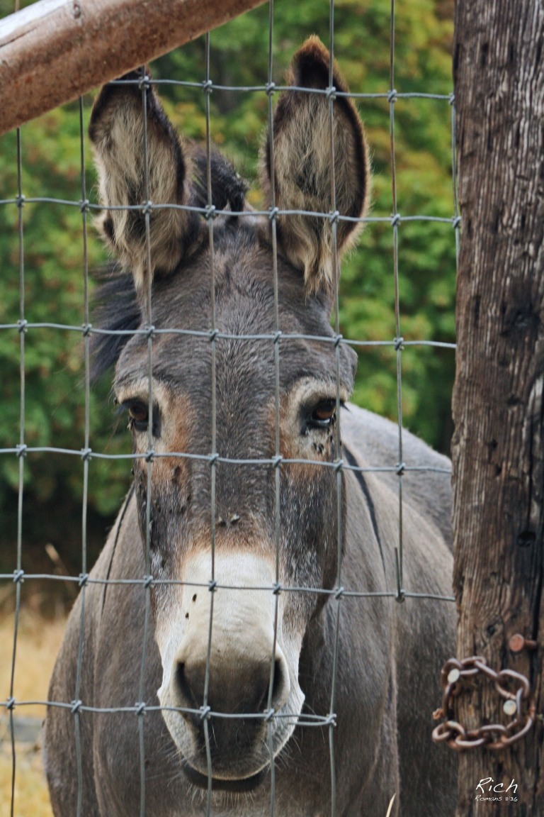 A Donkey's Life