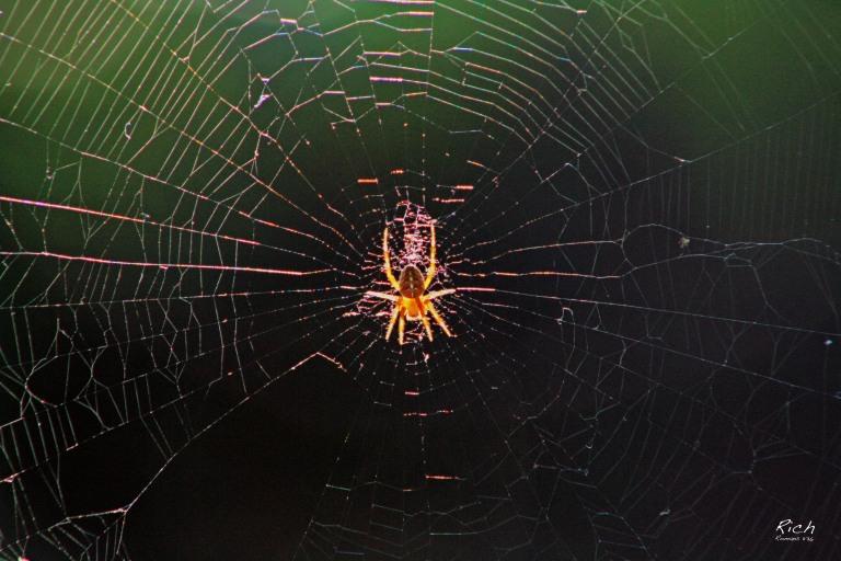 Spider Aglow