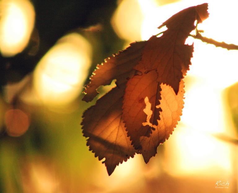 Sunset Through the Undergrowth