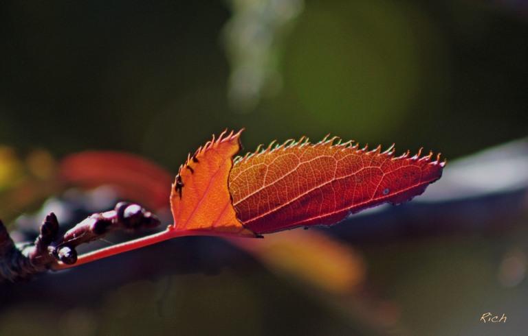 as-the-seasons-change