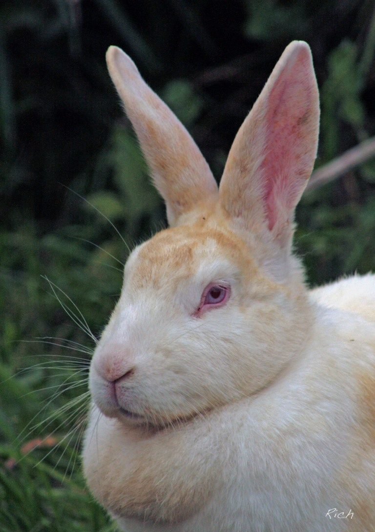 portrait-of-a-bunny-rabbit