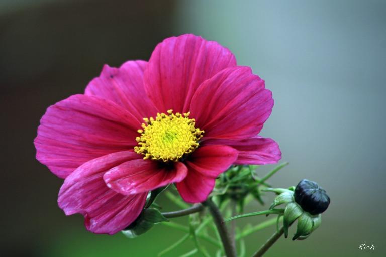 november-bloom