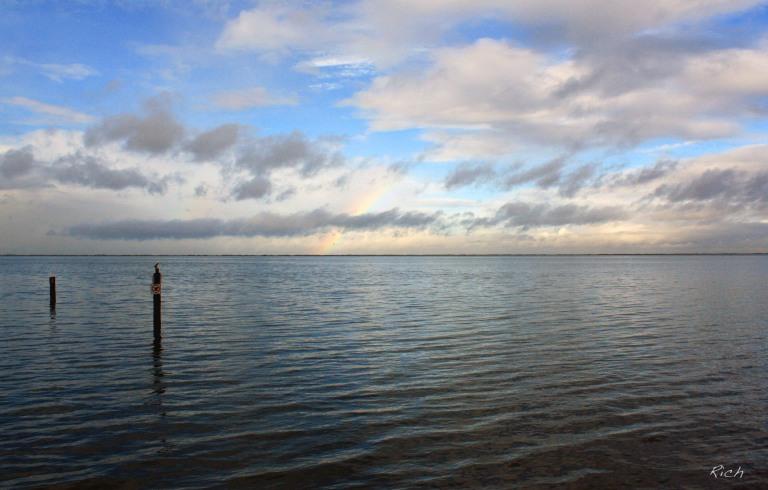 reticent-rainbow