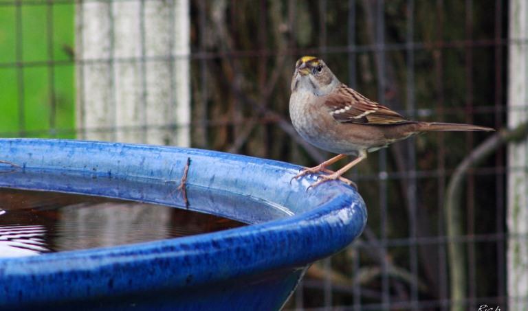 bird-on-the-bath