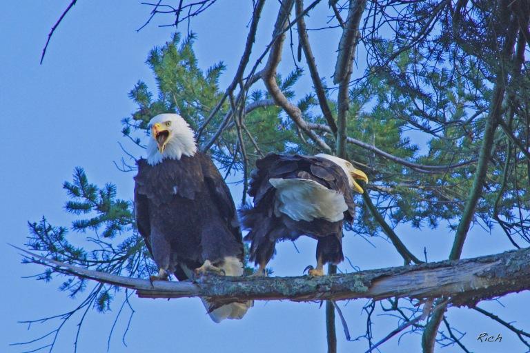 eagle-speak