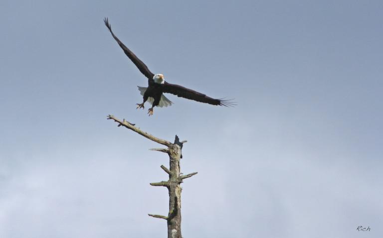 The Eagle Takes Flight
