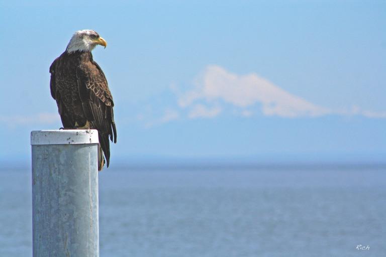 The Eagle & The Mountain