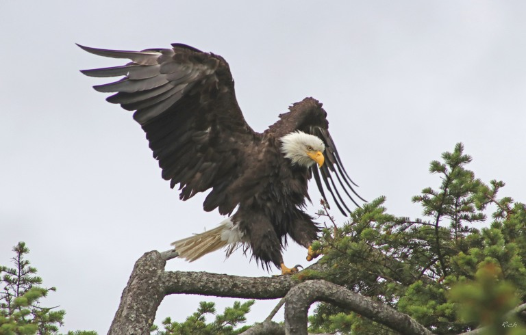 Dance of the Eagle