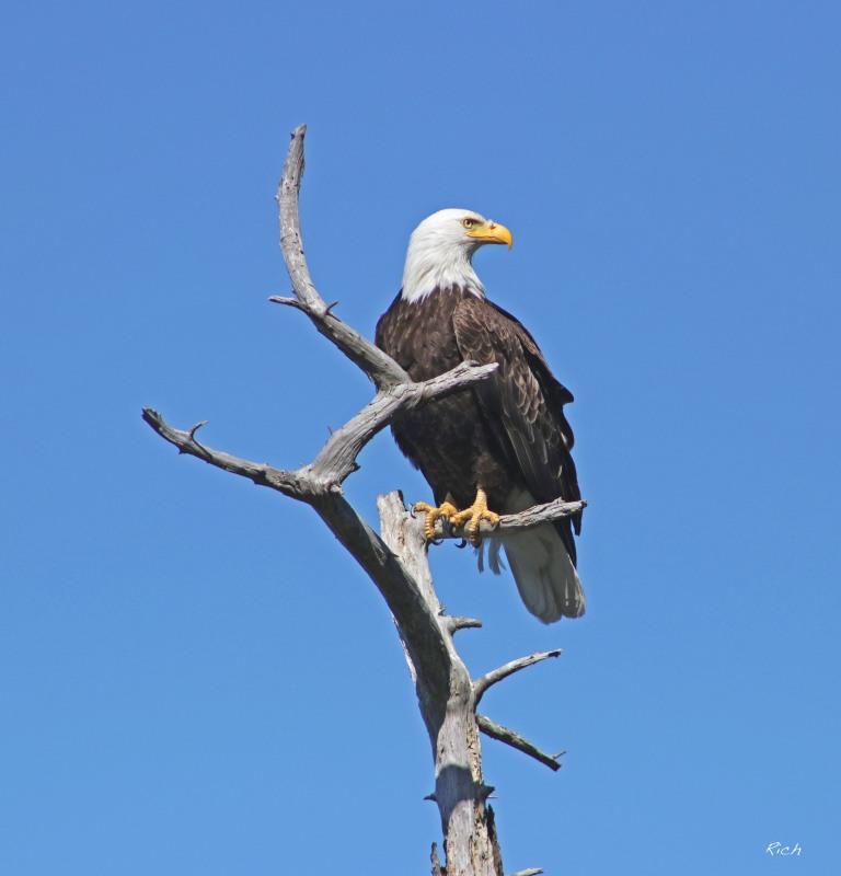 My Favorite Eagle