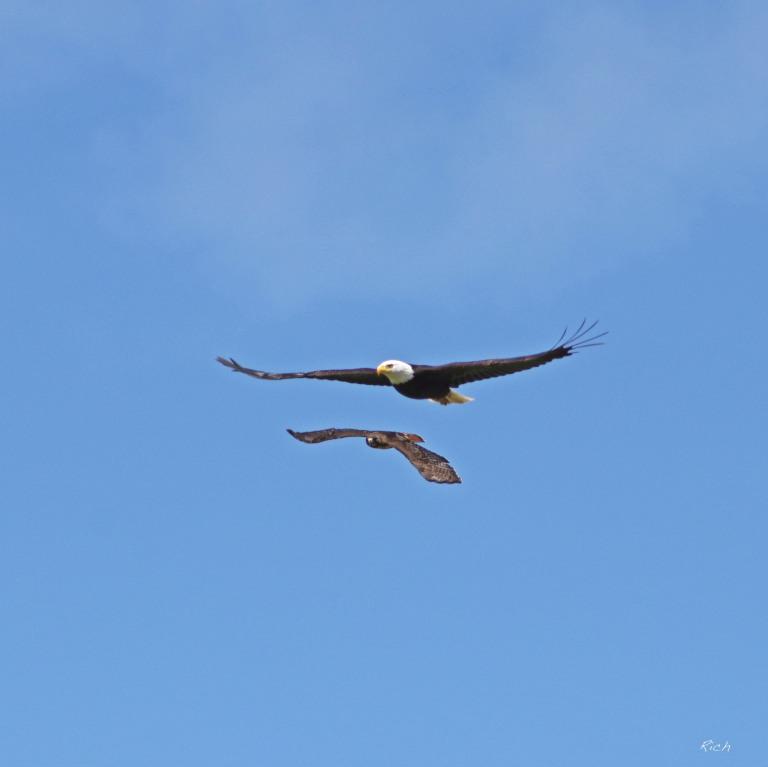 Hawk V. Eagle