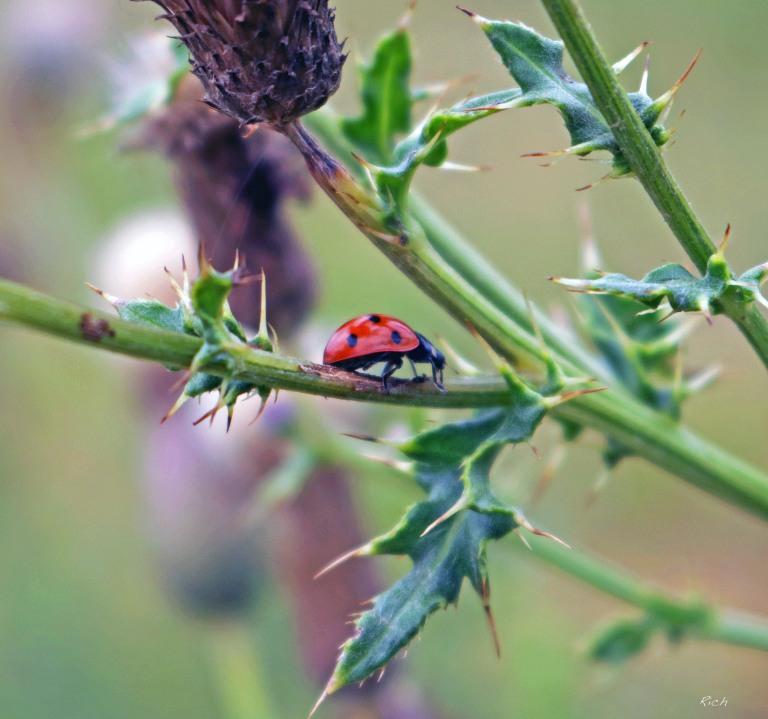 A Ladybug's World