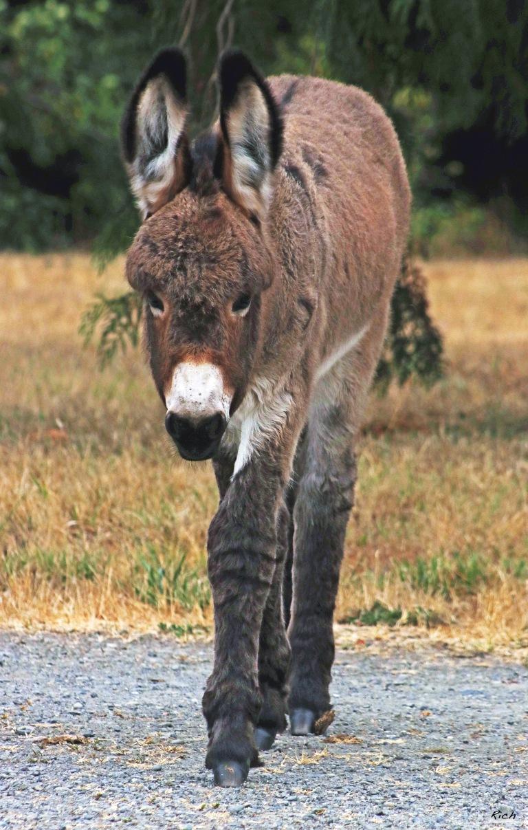 Sweet Baby Donkey