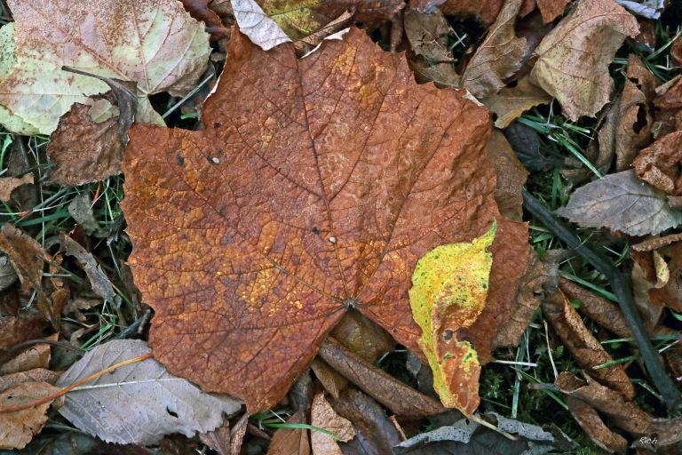 Autumnal Carnage