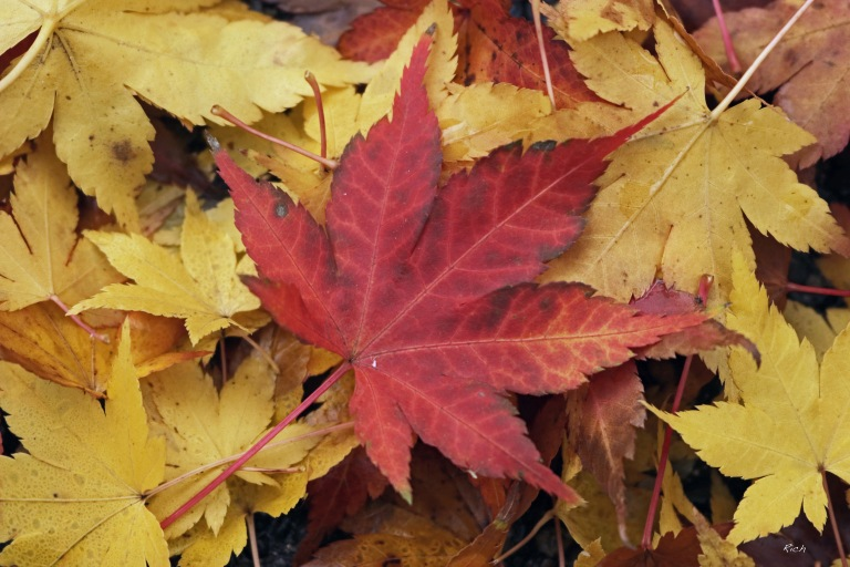 Autumn's Fallen