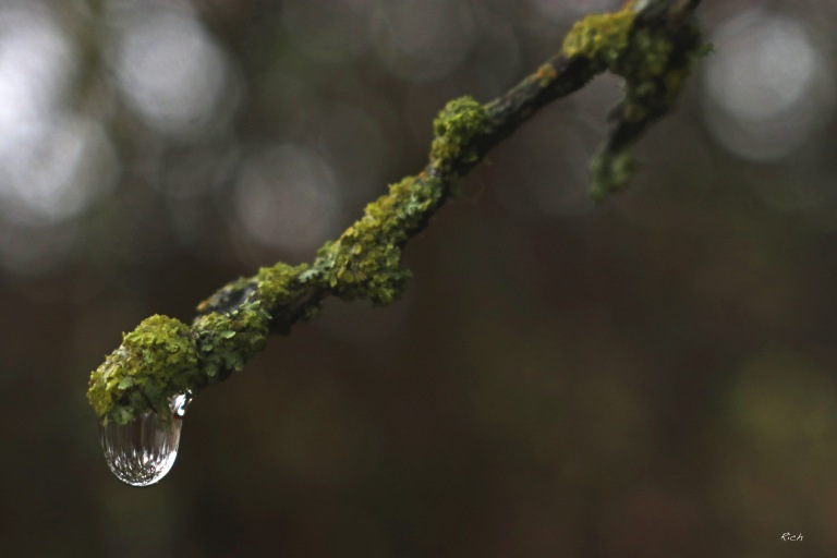 One Random Droplet