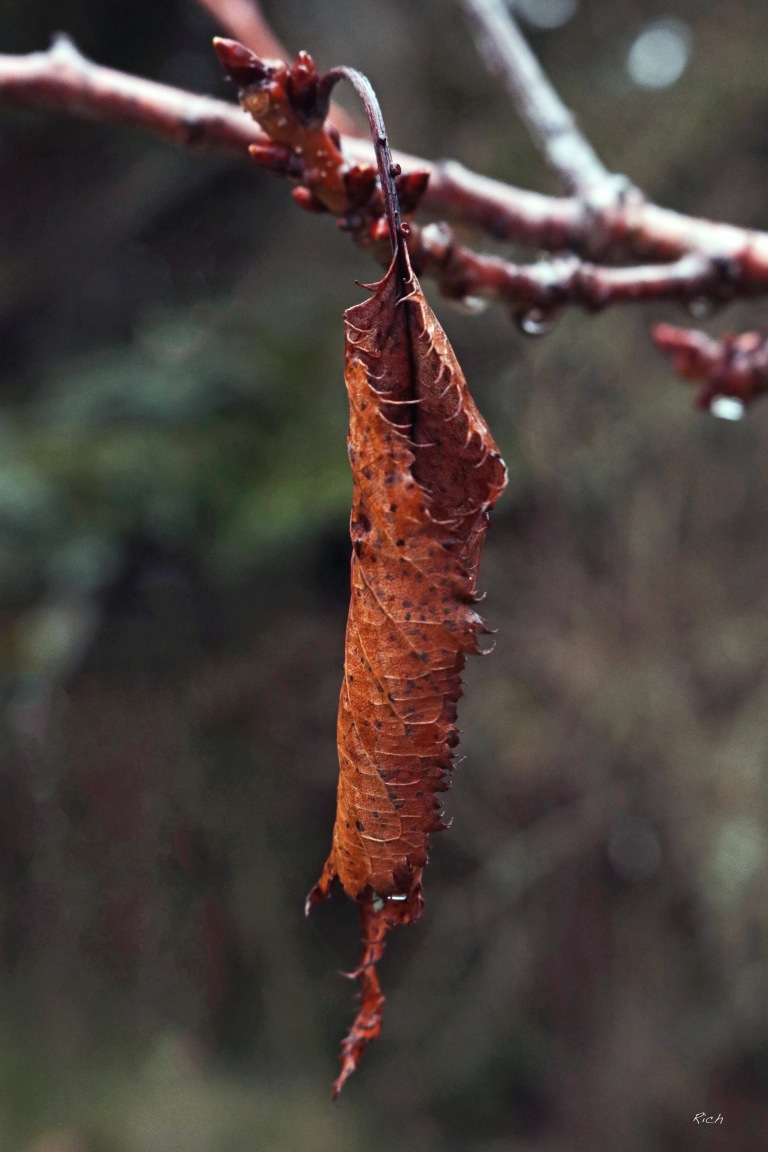 Withered & Worn